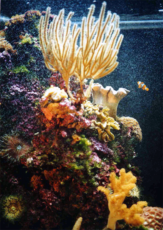 NorthCoralHead - The wonderful world of coral reefs  - Science and Research